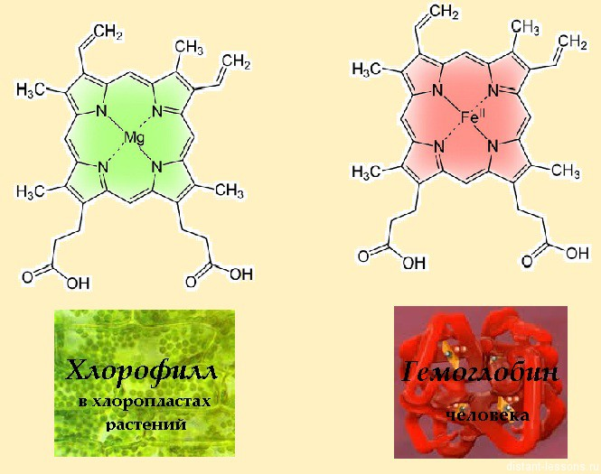 Химические свойства хлорофилла